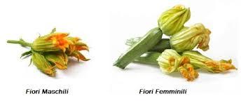 zucca fiori